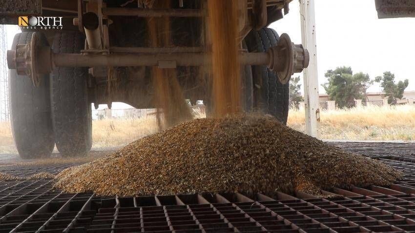 الإدارة الذاتية تمنع إخراج القمح خارج مناطق سيطرتها