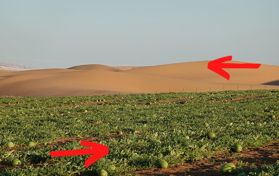 من صحراء قاحلة إلى واحة زراعية.. ابتكار حديث يقلب الموازين في الاقتصاد الزراعي
